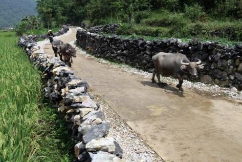 Đường vào Phia Chang, Đỏ Cọ tuyệt đẹp với hai hàng đá xếp thật khéo nhằm bảo vệ rau màu khỏi sự phá phách của gia súc.
