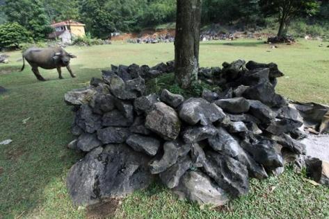 Không thiếu một gốc cây nào trên bãi chăn thả không được người dân xếp đá bảo vệ khỏi sự phá phách của đàn gia súc.