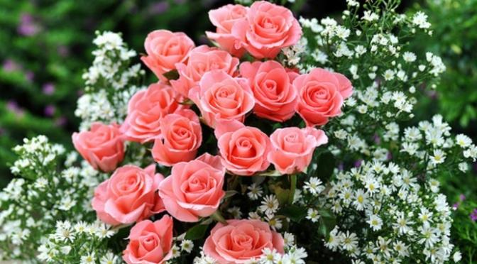 Những bông hoa đẹp
