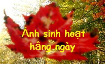 lá đỏ_1