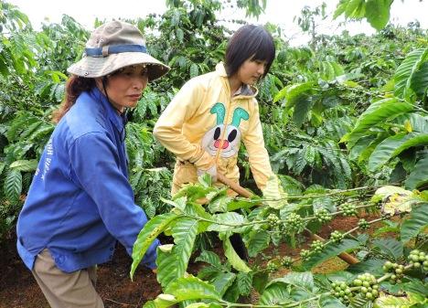 Nhược Nam cùng mẹ cuốc cỏ cà phê