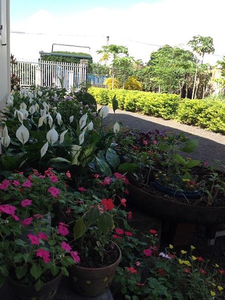 001 _ Vườn hoa trước nhà Lưu trú