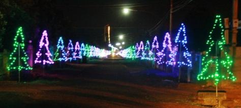 Đường vào xã Cư ÊBur trang hoàng hai hàng thông Noel