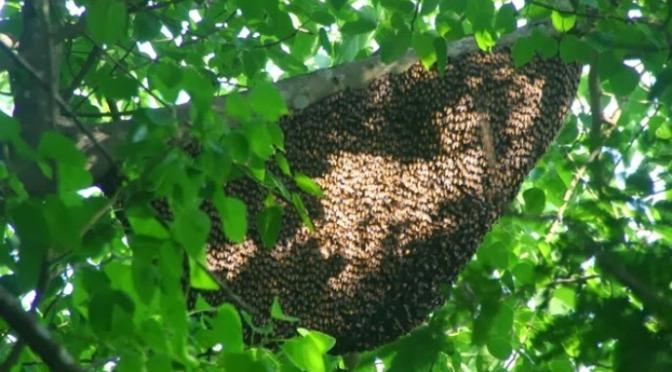 Lúc bị ong đốt