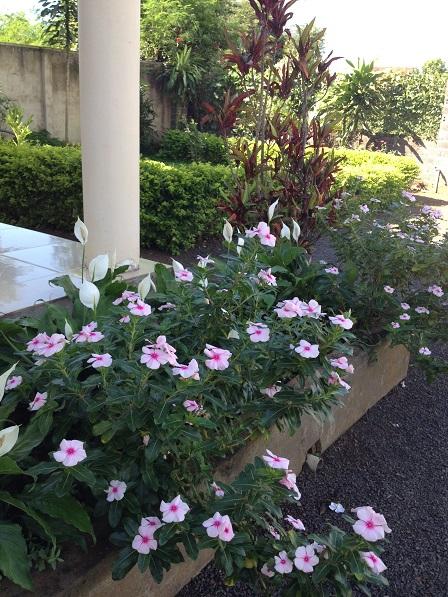 Ảnh hoa Tứ Quí ở góc sân nhà Lưu trú sắc tộc Buôn Hằng.
