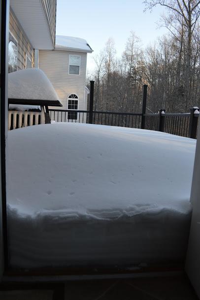 Sáng chủ nhật, Jan 25, 2016, back porch (sân nổi sau nhà)