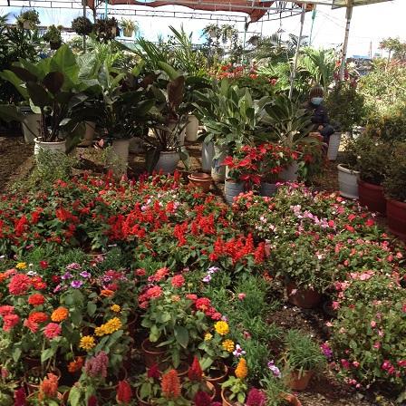 4/ Ảnh khu vực bán những loại hoa và cây cảnh thấp có thể chưng trên bàn trong những ngày Tết.
