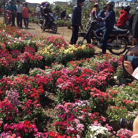 5/ Ảnh khu vực bán hoa muôn màu muôn sắc rất đẹp, chỉ có người canh giữ không có người mua.