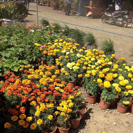 6/ Ảnh khu vực chưng bán hoa vạn thọ và các loại bình hoa nhỏ khác.