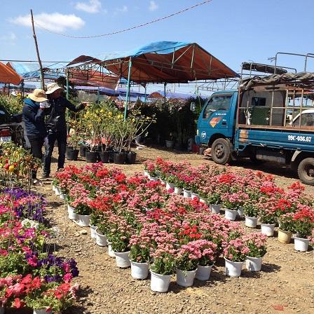 7/ Ảnh hoa, xe chuyển hoa, những người canh hoa và nhà bạt nghỉ đêm của những người giữ bán hoa Tết.