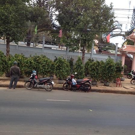 1/ Ảnh điểm bán cây quất cảnh trước ủy ban nhân dân huyện Ea H'Leo 9g00 sáng ngày 28 Tết 2016, chỉthấy người canh giữ không thấy người mua.