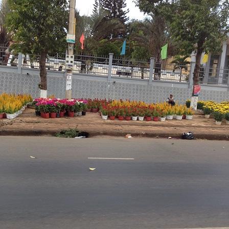 2/ Ảnh vắng khách mua trước điểm bán hoa chưng Tết, trên vỉa hè quốc lộ 14 trước ủy ban nhân dânhuyện Ea H'Leo 9g00 sáng ngày 28 Tết 2016.