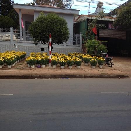 3/ Ảnh điểm bán hoa chưng Tết trên quốc lộ 14 trước ủy ban nhân dân huyện Ea H'Leo 9g00 sáng ngày28 Tết 2016, cũng chỉ thấy người canh giữ không thấy người mua.