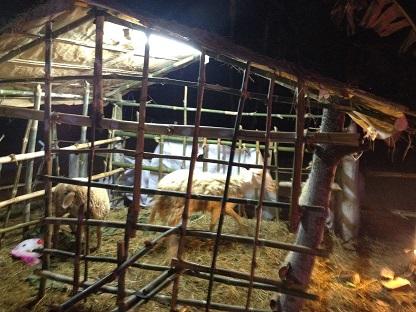 Ảnh chuồng nuôi hai con cừu ở ngoài thị trấn Phước an.