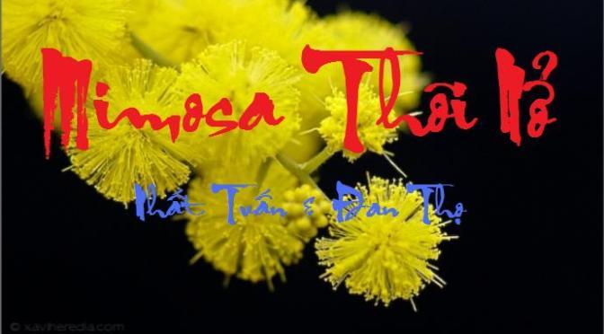 """Tân Nhạc VN – Thơ Phổ Nhạc – """"Mimosa Thôi Nở"""" – Nhất Tuấn & Đan Thọ"""