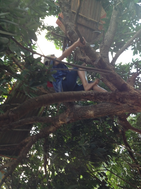 2/ Ảnh em Đel cũng đã trèo lên gần đến chỗ ngủ của em trên cây.