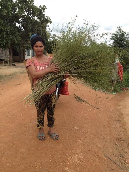 1/ Ảnh mẹ Nghi bên xóm Đào đi làm rãy về với một bó cây chổi trên tay.