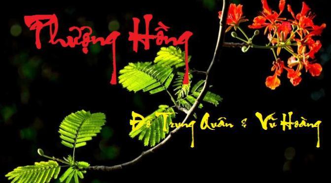 """Tân Nhạc VN – Thơ Phổ Nhạc – """"Phượng Hồng"""", """"Hương Tình Yêu"""" – Đỗ Trung Quân & Vũ Hoàng"""