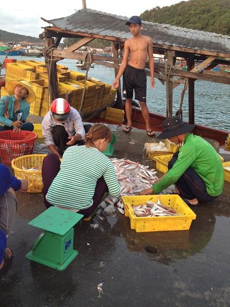 Lựa cá trên bến cảng Quốc tế An Thới Phú Quốc