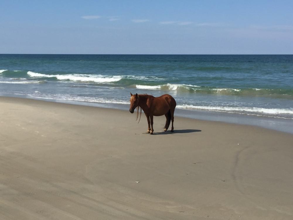 Chú an nhiên tự tại tắm nắng trên bờ biển không màng đến thế sự.
