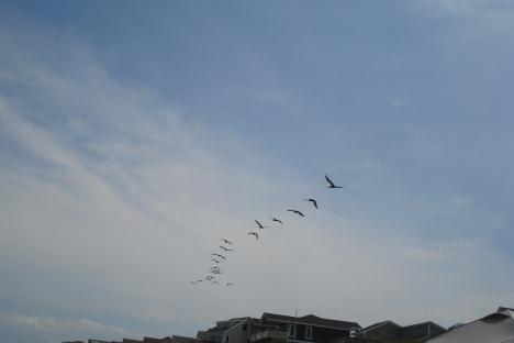 Đàn chim ? bay lượn.