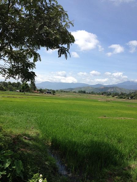Ruộng lúa nhà mẹ Sâm mùa nắng xanh tốt nhờ thường xuyên được bơm nước giếng vào.