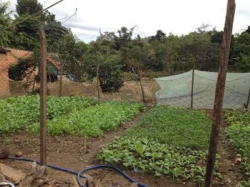 2/ Ảnh vườn rau của gia đình bố mẹ Thiếu bên xóm Đào, được vây bởi những tấm lưới bạt cho heo gàkhông vào được