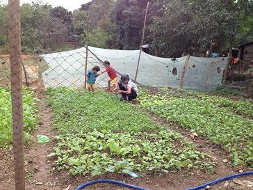3/ Ảnh em Thần Thoại nhổ rau vào nấu và hai em nhỏ chơi trong vườn rau.