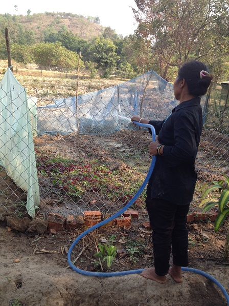 Vườn rau của mẹ Hreng mùa khô nắng