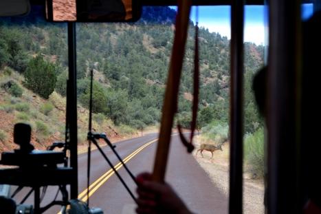 Trên đường ra có một chú nai đang lững thững băng ngang lộ. Xe bus phải dừng lại chờ cho chú qua đường an toàn rồi mới tiếp tục đi.