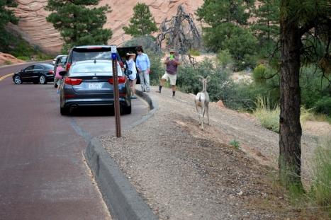 Một chú còn ở đây. Còn 3 chú kia thì lên trên đồi phía bên kia đường.