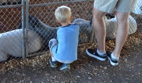 Em bé này thích chú dê quá cứ nấn ná vuốt ve không muốn rời làm bố em cũng phải đứng lại chờ em.