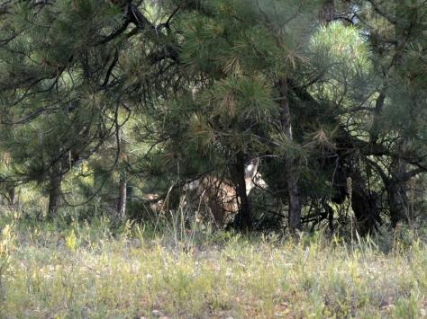 Mẹ của chú thấy mình sợ bỏ chạy vào rừng.