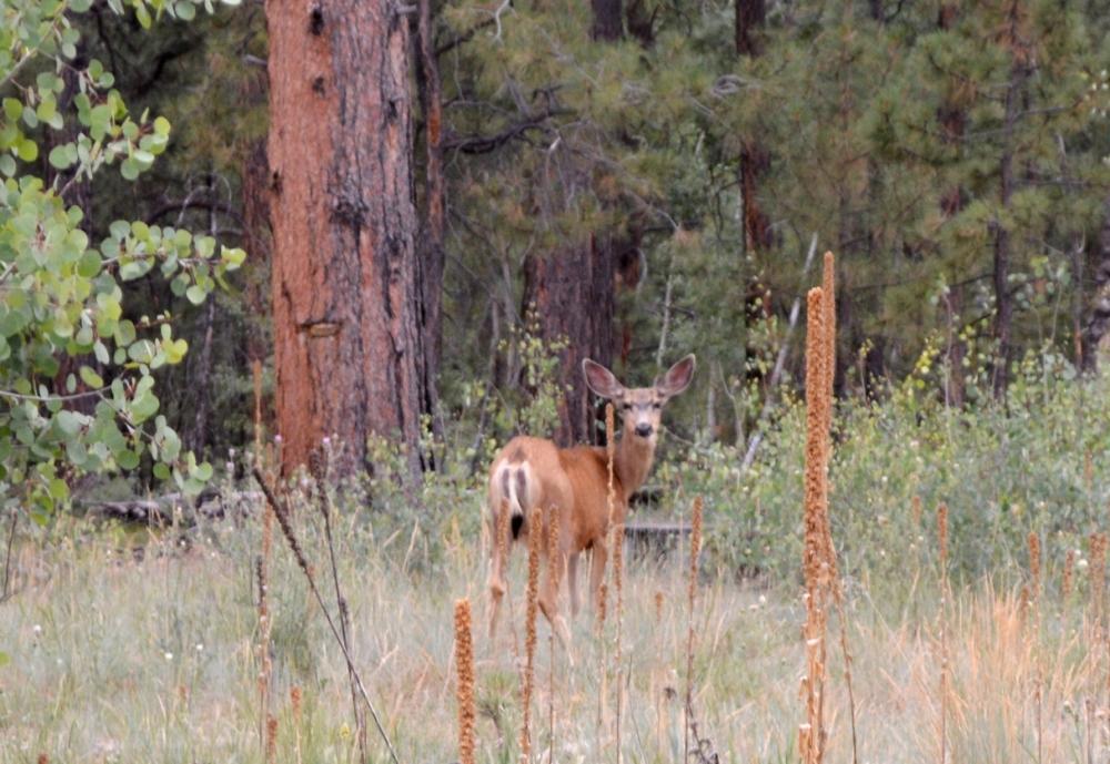 Cũng ở một đoạn khác trong cánh rừng chú này ngưng ăn vì nghe tiếng động của xe mình ngừng.