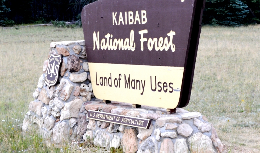 Xuyên qua cánh rừng quốc gia Kaibab National Forest để đến Công Viên Quốc Gia Grand Canyon National Park.