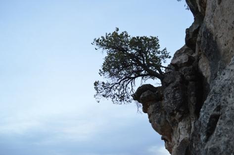 Trên đầu tường đá đường đi có mỏm này nhô hẳn ra ngoài và có một cây mọc bên trên.