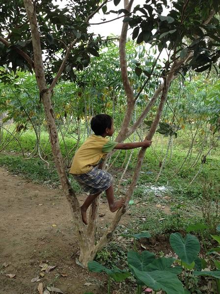 1/ Ảnh em Dim trèo lên cây ổi sau nhà.