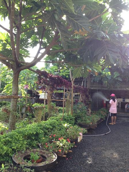 Em Razen đang tưới hoa, cây ăn trái và vườn rau nhà Lưu trú.