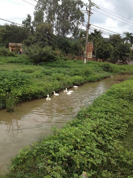 1/ Mương nước trên con đường chính của Buôn Làng sau cơn mưa.