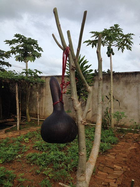 1/ Ảnh trái bầu đã được phơi khô và phơi trên giàn bếp nhiều tháng cho đen. Em Chie về nhà mang trái bầu khô ra Lưu trú để đựng nước uống.