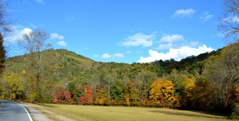 dãy núi này còn nhiều cây màu xanh.