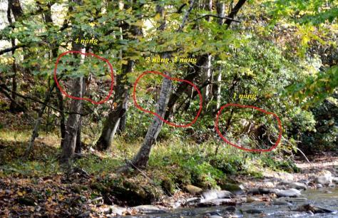 Các bạn có nhìn thấy 4 nàng Elks đang xuống suối mà mình khoanh trong vòng màu đỏ?