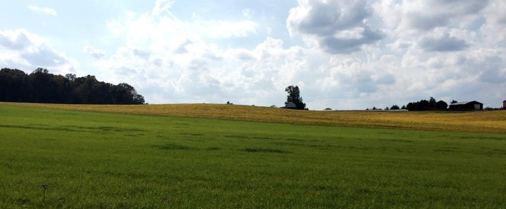 Đồng lúa mì trên xa lộ số 3. Trên đường đến xa lộ 33.