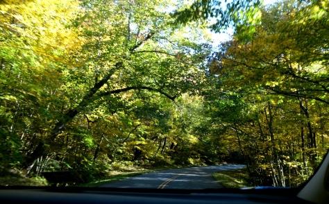 Rồi đi qua một khoảng đường dài với những lộng cây màu vàng xanh là xà trên đầu như thế này.