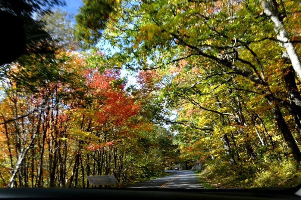 Lại được đi dưới lộng cây đầy màu sắc như thế này một đoạn dài.