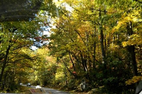 Tiếp tục đi qua đoạn đường nhiều lộng cây khác.