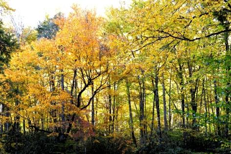 Bên kia cầu rừng cây đẹp tuyệt.