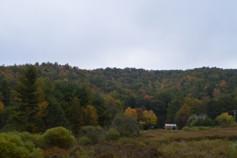 Căn nhà đơn độc giữa rừng.