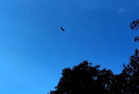 Một chú chim đang rong chơi.