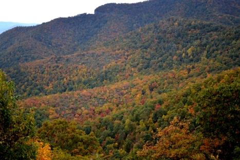 Quan sát gần hơn thì thấy cây lá màu sắc đậm hơn.